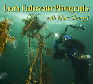Marc Shargel and ProScuba Dive Center offer Underwater Photo Class