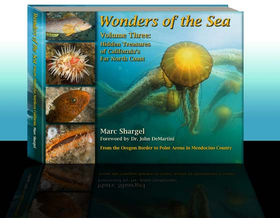 Wonders of the Sea Volume Two: Marine Jewels of Southern California's Coast and Islands